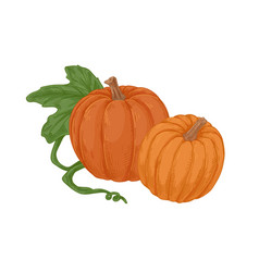autumn orange pumpkins with stems and green leaf vector image
