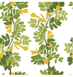 Blossom acacia yellow flowers seamless pattern vector