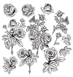 collection hand drawn roses for design vector image
