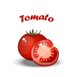 fresh healthy tomato vector image