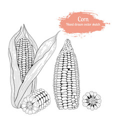 hand drawn set sketch corn vector image