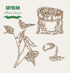 hand drawn soy plant soy twig and soybean vector image