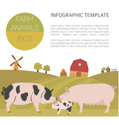 Pig farming infographic template hog sow pig vector