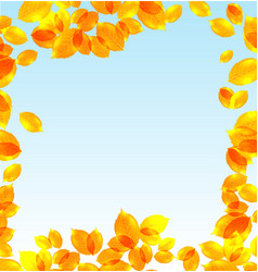 yellow leaves fall background vector image