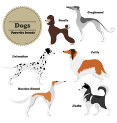 Image set of dogs Greyhound Russian hound Husky vector image vector image