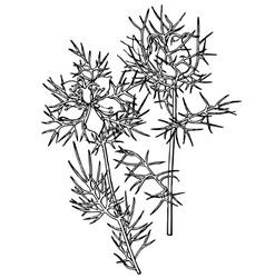 plant nigella damascena vector image vector image