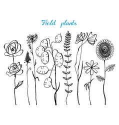 field flowers with leaves set of wedding vector image