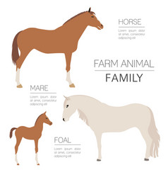 horse farming infographic template stallion mare vector image
