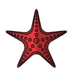 Starfish animal isolated icon vector
