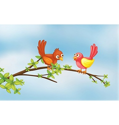 A couple bird vector image