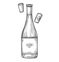 bottle wine freehand pencil drawing vector image