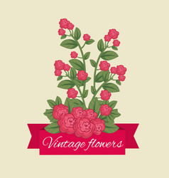 cute flowers with nature petals and leaves vector image