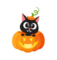 Flat cat sitting at big scary pumpkin vector