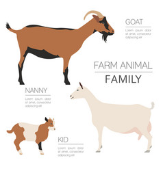 Goat farming infographic template animall family vector