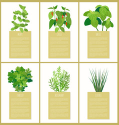 Natural herbs used in culinary as condiments set vector