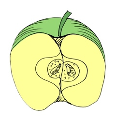 cutting apple vector image vector image