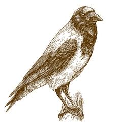 engraving crow vector image