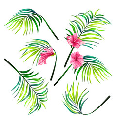 set of botanical of tropical vector image