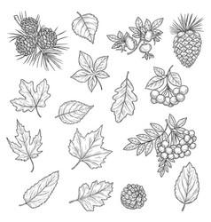 Autumn leaf maple and oak fall acorn and rowan vector