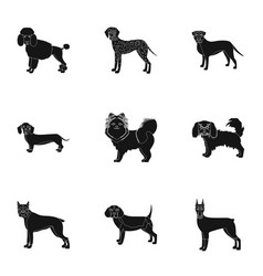 dachshund laika poodle and other web icon in vector image