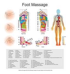 Foot massage point charts vector