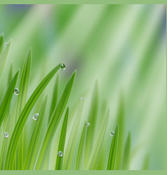 Grass in droplets water with sunrays background vector