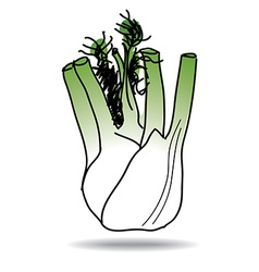 freehand drawing fennel icon vector image
