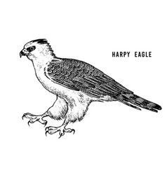 happy eagle wild forest bird of prey hand drawn vector image
