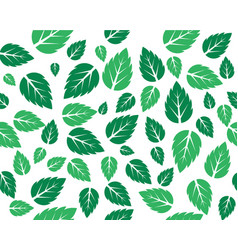 mint fresh leaves template vector image