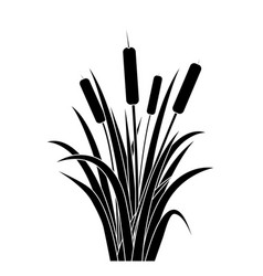 Silhouette black water reed plant cattails leaf vector