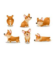 brown corgi dog animals doing everyday things vector image