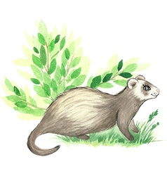 Cute watercolor ferret vector image