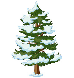 pine tree with snow on it vector image