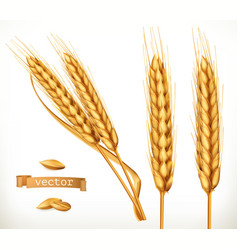 ears of wheat 3d icon set vector image
