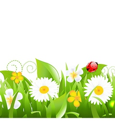 Flowers With Grass Leafs And Ladybug vector image vector image