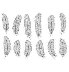 Light gray isolated fluffy bird feathers vector image