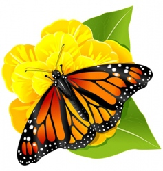 Monarch butterfly on flower vector