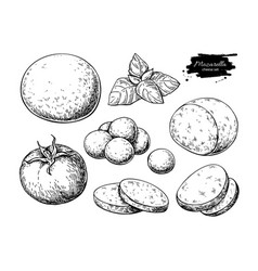 Mozzarella cheese drawing hand drawn round vector