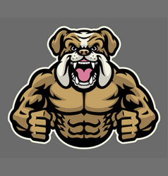 Muscle angry bulldog vector