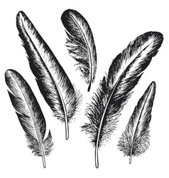 the set of natural feather bird hand drawn vector image