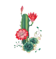 card with cactuses and succulents set plants vector image