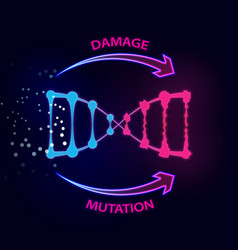 External factors that cause dna damage and vector