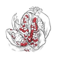 Sketch of garnet vector image