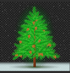 spruce tree dark transparent background vector image