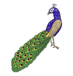hand drawing peacock 2 vector image vector image