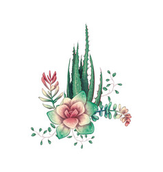 Card with cactuses and succulents set plants of vector