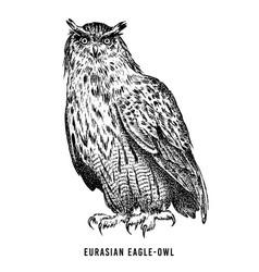 eurasian eagle owl wild forest bird of prey hand vector image