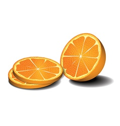 Fresh oranges fruits vector