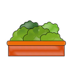 isolated decorative bush vector image vector image