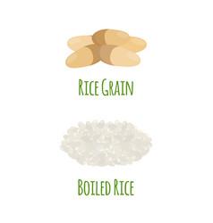 rice vegetarian food green harvest oryza wheat vector image vector image